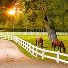 Lovely horses grazing at dusk... by grantsphoto