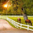Lovely horses grazing at dusk... by grantsphoto