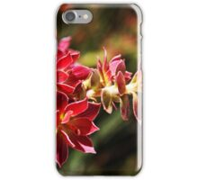 Wild-flower in Fitzgerald River National Park iPhone Case/Skin