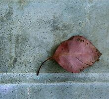 Minimalist Leaf Portrait by Jane Underwood