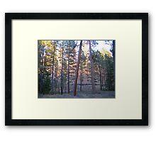 ponderosa forest 2 Framed Print
