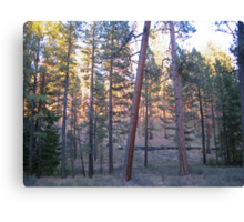 ponderosa forest 2 Canvas Print