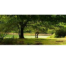 Under the Trees Photographic Print