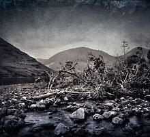 Fallen Trees by Svetlana Sewell