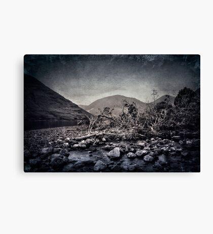 Fallen Trees Canvas Print