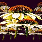 Cone flowers  by JohnDSmith