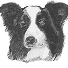 Border Collie Dog Pencil Drawing by Catherine Roberts