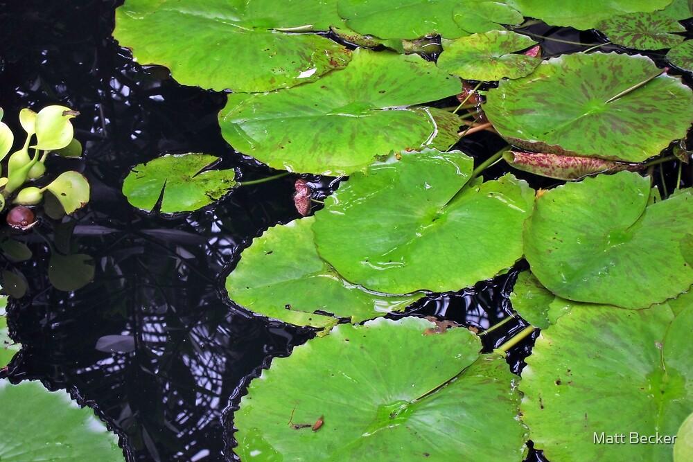 Lincoln Park Lily Pads by Matt Becker