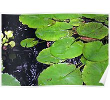 Lincoln Park Lily Pads Poster