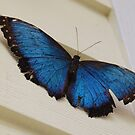 Butterfly at a farm by Sweetpea06