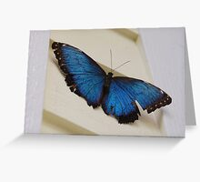 Butterfly at a farm Greeting Card