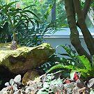 Butterfly on a rock by Sweetpea06