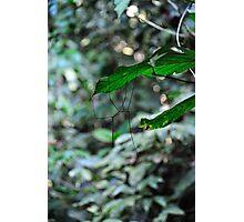 """Walking Stick"" Photographic Print"
