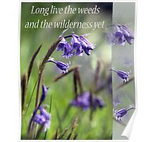 Long Live The Weeds and The Wilderness Poster