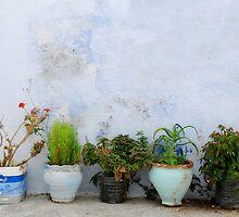 A Parade of Pots by Celia Strainge