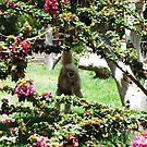 Monkey through some trees by Sweetpea06