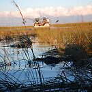 Everglades in Miami by Sweetpea06
