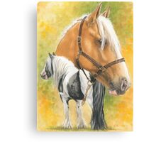 Irish Cob Canvas Print
