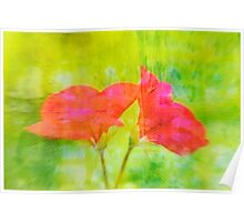 Red Flower with Green Background Poster