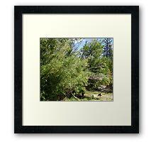 Deer Habitat Framed Print