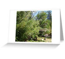 Deer Habitat Greeting Card