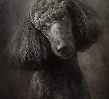 Poodle by Mark Cooper
