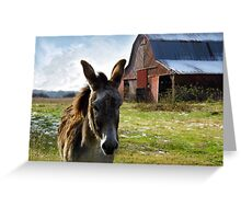 Hargroves' Mule Greeting Card