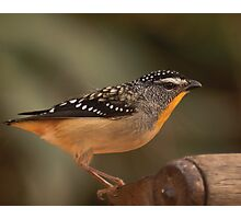 Spot the Pardalote Photographic Print