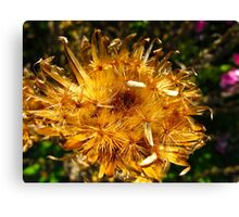 Golden sprinkles Canvas Print