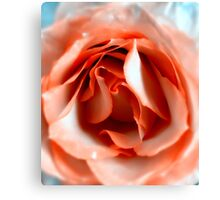 Rose heart one Canvas Print