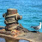 Seagull at Potter's Cay in Nassau, The Bahamas by Jeremy Lavender Photography