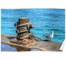 Seagull at Potter's Cay in Nassau, The Bahamas Poster