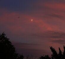Moon Jet by Adam Kuehl