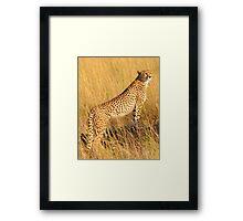 Masai Mara Cheetah Framed Print
