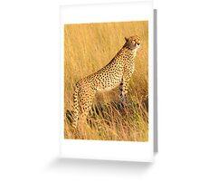 Masai Mara Cheetah Greeting Card
