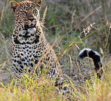 The Leopard by Roger  Mackertich