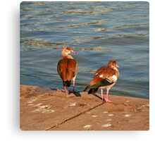 What are you Looking at ? Canvas Print
