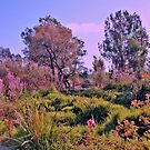 In the Park by Nira Dabush