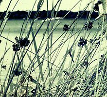 Reed Grass Composition by Friederike Alexander