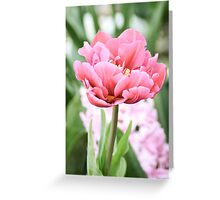 Tulip 1 Greeting Card