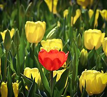 The way to stand out in a crowd by Alison Hill