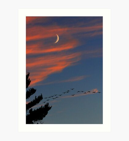 Canada Geese in the Crescent Moon Art Print