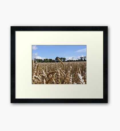 Crop Field, September 2012 Framed Print
