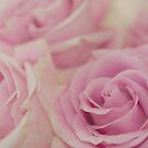 ...pink and cream roses....#2.... by Jane Anastasia Studio