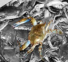 Crabs by Dave Lax