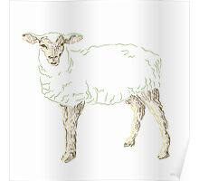 Year of the Sheep Poster