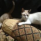 RENAISSANCE CATS by dpmartin777