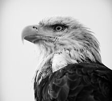 Eagle by smilyjay