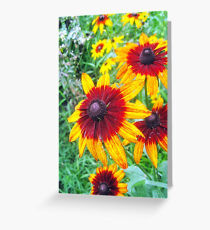 summer of susans Greeting Card