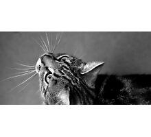 A Natural Curiosity Photographic Print